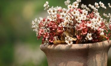 Пролетна градина